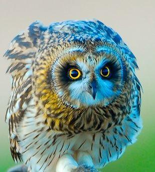 Marvelous owl - ♥ - via: queenbee1924 - Imgend