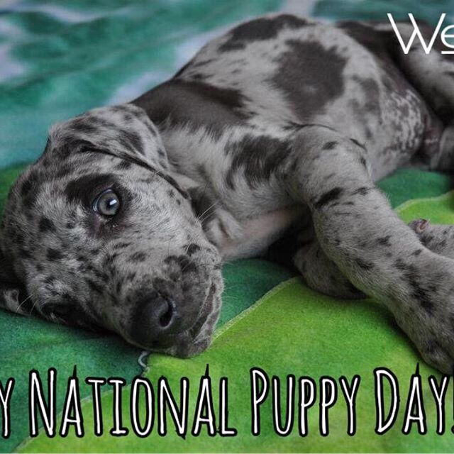 Cuteness everywhere!!! ☺️ happy national puppy day 🐾❤️👣 #welinktags #idtags #dogs #doglove #dog #doglover #friendship #bestfriends #cats #catlovers #catstagram #dogstagram #happiness #together #nationalpuppyday