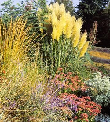 Best ornamental grasses for Midwest gardens.