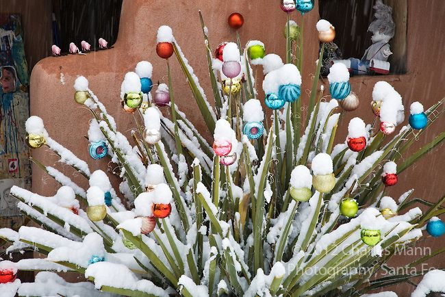 At the Kelly gallery on Canyon Road in Santa Fe a decorated yucca makes a good stand in for a Christmas t.ree