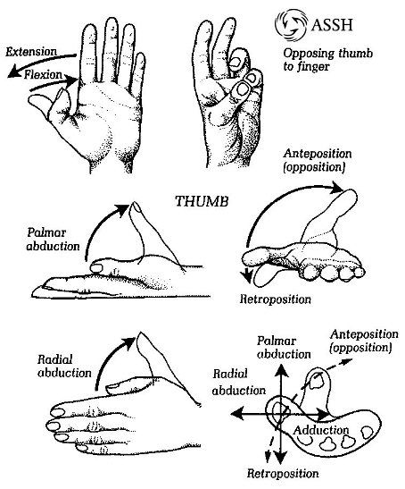 HAND Diagram of hand movement terminology