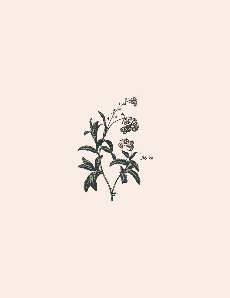 Botanical Illustration from a brand concept for Houston lifestyle and wedding photographer by Swoone