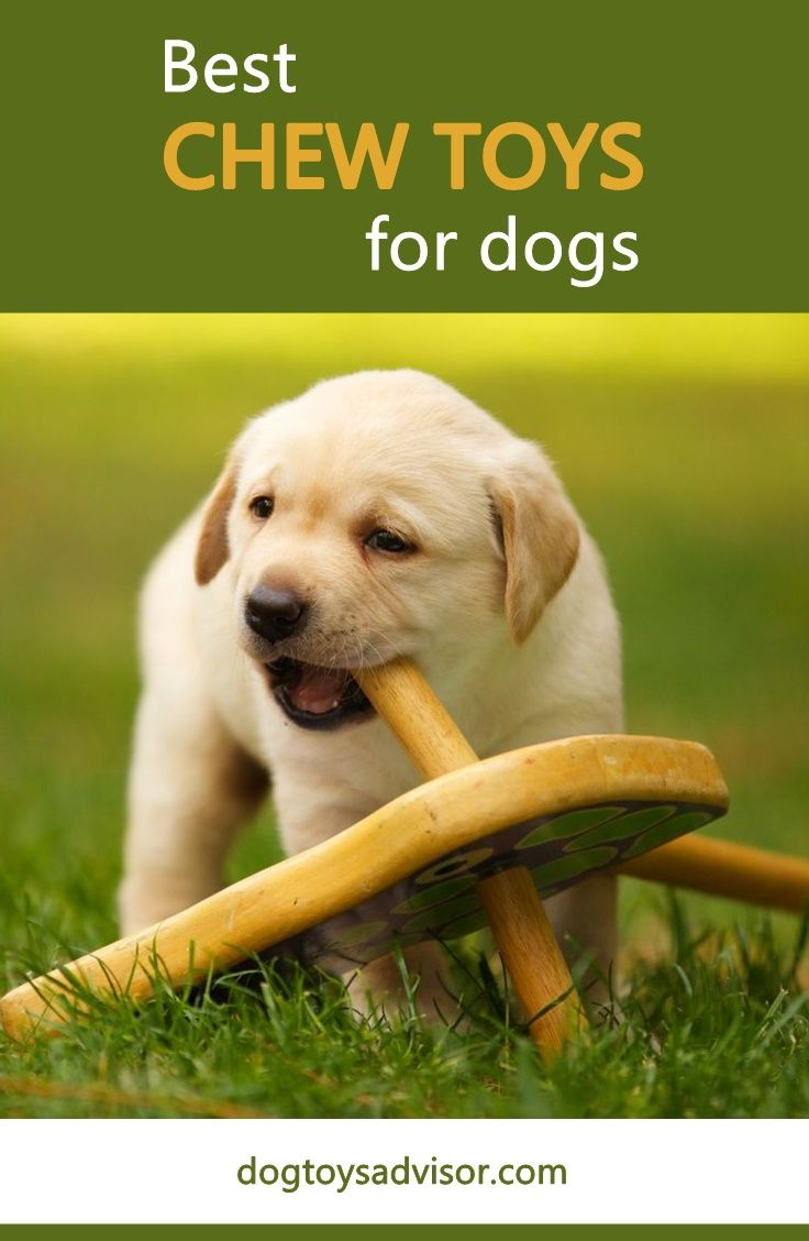 Looking For The Best Dog Chew Toys Check Out Our Reviews Of The