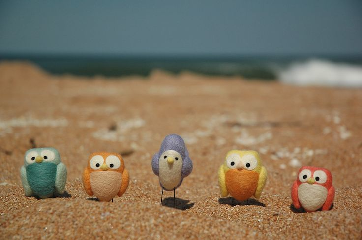 owls on the beach!: At The Beaches, Small Pet, Owli Things, Close Friends, Vacations Holidays, Felt Birds, Animal Friends, Adorable Birdi, Owl Boards