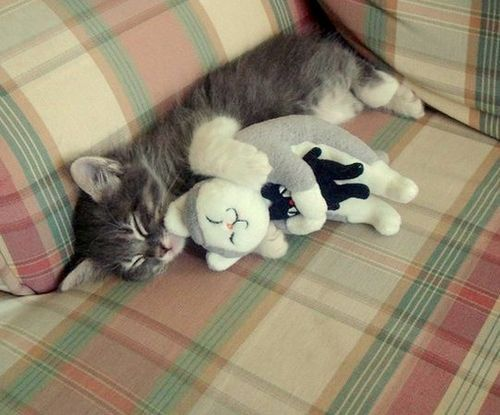 This is almost too cute. It almost hurts.: Kitty Cat, Cat Hugs, Sweet, Cute Cats, Inception Cat, Pet, Cat Cuddling, Crazy Cat, Cat Ladies