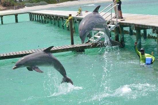 Visiting Anguilla? Join us for the experience of a lifetime swimming with dolphins!    http://www.dolphindiscovery.com/anguilla/anguilla-location-overview.asp