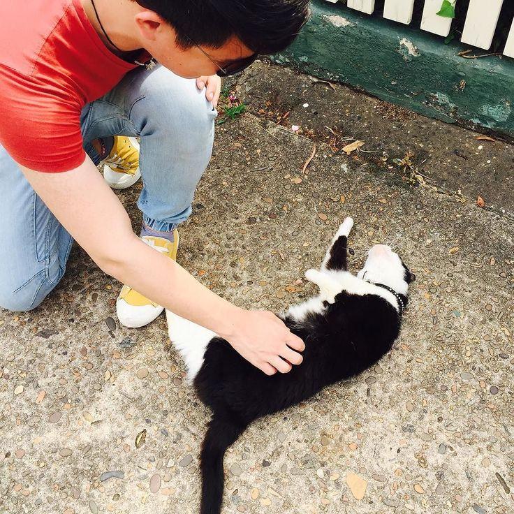 Scratch my belly please hahaha so cute #cat #street #leichhardt #sydney #walk by dom_ontheway