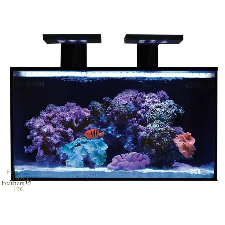 9 best large fish tanks images on pinterest fish tanks for 20 gallon saltwater fish tank