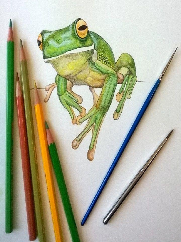 Disegno rappresentante una Rana. Realizzato con Tecnica Mista, acquerello e pastello, su carta 20 x 30 cm. Artigiano: Simona Breccia #Ductilia