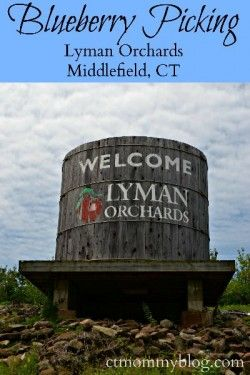Blueberry Picking at Lyman Orchards