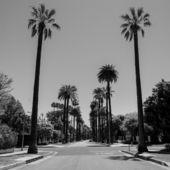 Des collines d'Hollywood aux plages de Santa Monica en passant par le quartier de Downtown, peuplé de grattes-ciels, Los Angeles s'étend à l'infini. Vivier de stars, temple du healthy, cet éden californien fascine. Voici six pistes pour commencer à apprivoiser la cité des anges.