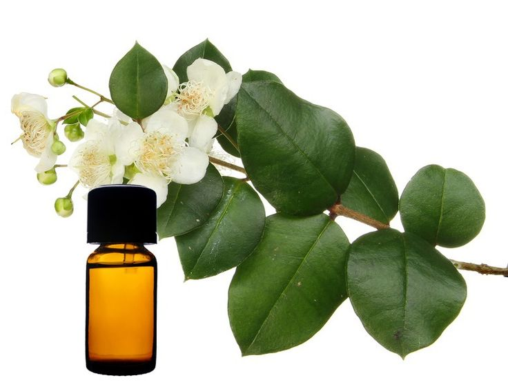 myrtle flower essential oil Myrtle Essential Oil: Normalizing the Function of Thyroid and Ovaries