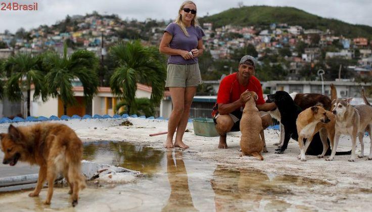 Sete cães protegidos | Casal desafia furacão em telhado para salvar animais em Porto Rico