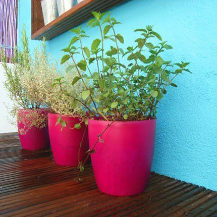 1000 id es sur le th me palette de jardin d 39 herbes for Jardin aromatique