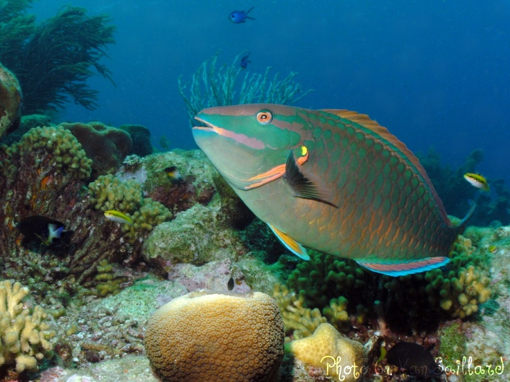 20 best mexico excursions images on pinterest cancun for Fish swimming backwards