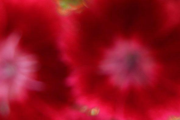 Garden flowers - Extreme closeup - 802