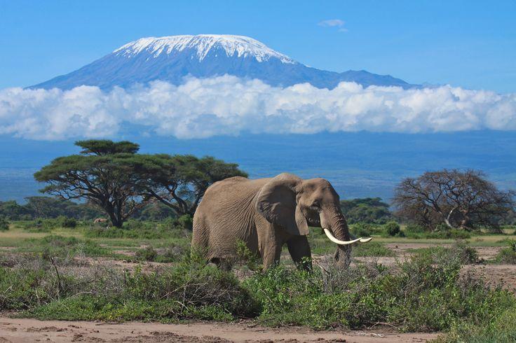 Kenia Reisen - Kilimanjaro Panorama