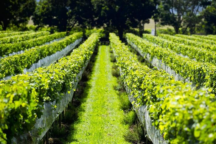 Millton Vineyards New Zealand