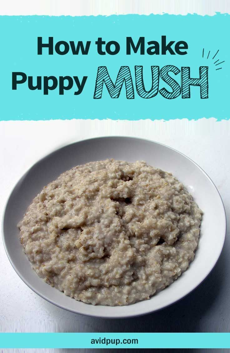 How to make puppy mush easy recipe dog nutrition
