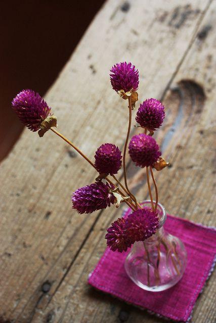 Globe amaranths (Gomphrena globosa): Style Inspiration, Simple Centerpieces, Purple Flowers, Beautiful, Flowers In Bottle, Wedding Flowers, Colors Splash, Pink, Jewels Tones
