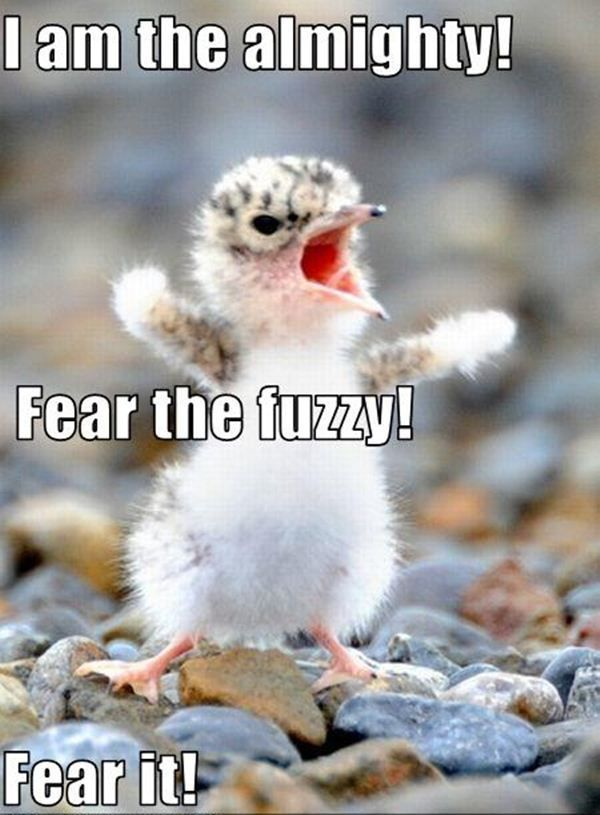 cute animals with funny captions | Funny animal pictures with captions, animal caption pictures, funny ... More