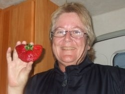 Giant strawberries at Beerwah, Queensland, Australia For more information about check out http://www.glasshousecountry.com