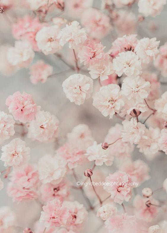 Baby S Breath Photography Gypsophila Print Flower Print Floral Photo Dreamy Pastel Pink Flo Pink Flowers Background Flower Aesthetic Pink Flowers Wallpaper