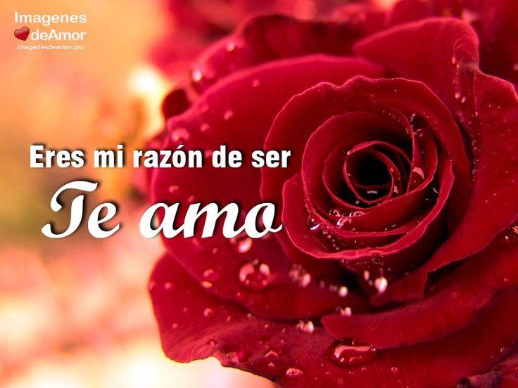 10 Imagenes De Rosas Para Decir Te Amo Al Amor De Tu Vida Rosas