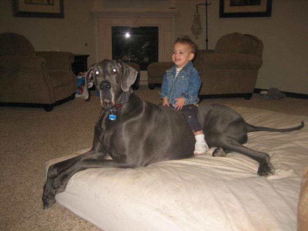 Giant George, World's Tallest Dog, Passes Away