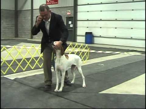 Dog Show Tips Episode 1 - The no fuss stack