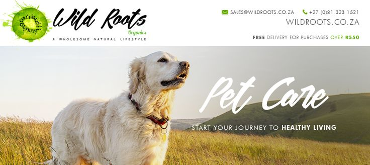 Our Pet Care products are free of poisons, toxins and chemicals, they are enriched with natural and essential oils to help balance their systems naturally.
