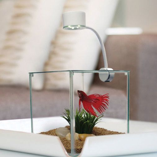 Features:  -Offers you an escape from the stresses of your life.  -Calming element into your everyday environment.  -Aquarium capacity: 0.9 Gallon.  -Marina collection.  Shape: -Square.  Water Capacit