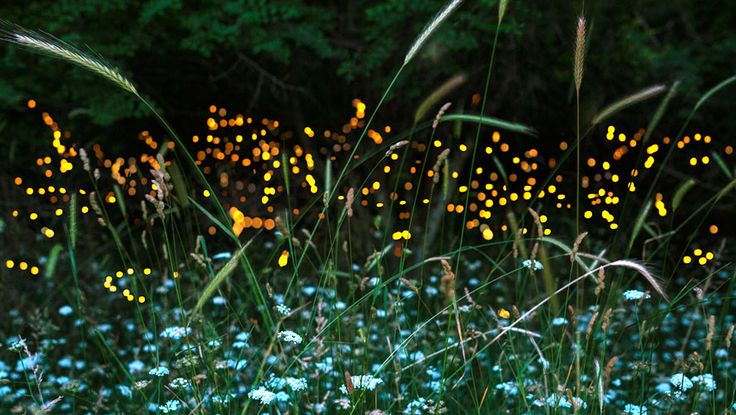 6 Ways To Attract Fireflies To Your Yard http://www.rodalesorganiclife.com/garden/6-ways-to-attract-fireflies-to-your-yard