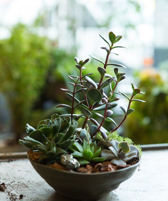 20 best images about plants planters indoor on for Top 20 indoor plants