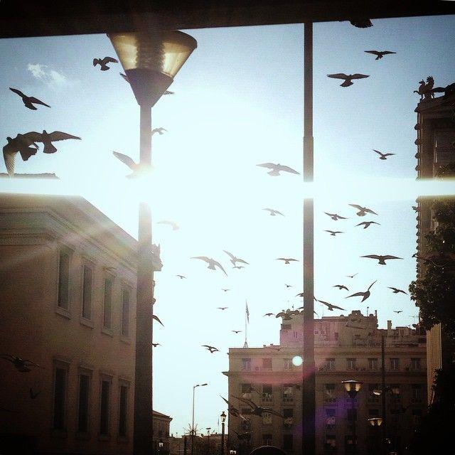 Εμένα οι φίλοι μου είναι μαύρα πουλιά (στην τοποθεσία Πανεπιστημίου)