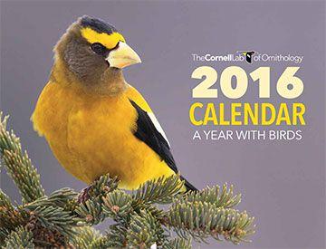 Free 2016 Cornell Bird Calendar