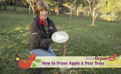 how to keep ants off of fruit trees