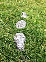 r-anne-dom: Saturday Spotlight: Cement Gators
