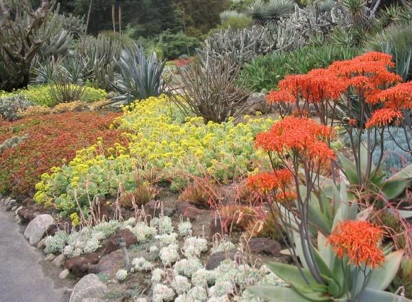 6237 best desert garden images on Pinterest Desert gardening