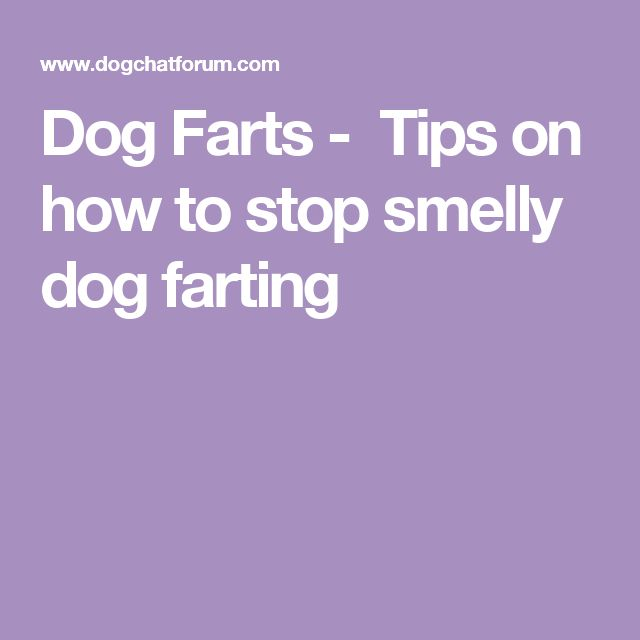 Dog Farts - Tips on how to stop smelly dog farting