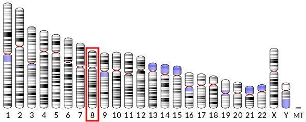 κ-opioid receptor | KOR | Chromosome 8 | Addiction Control