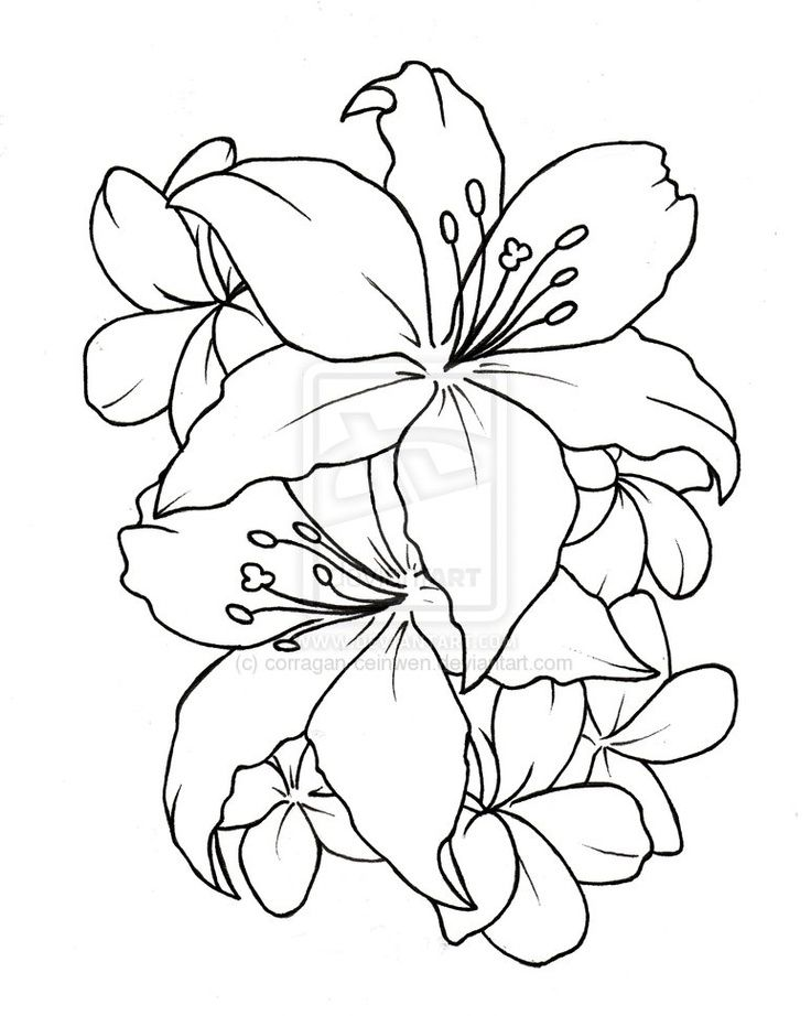 Lilly tattoo design... Possible cover-up tattoo for shoulder