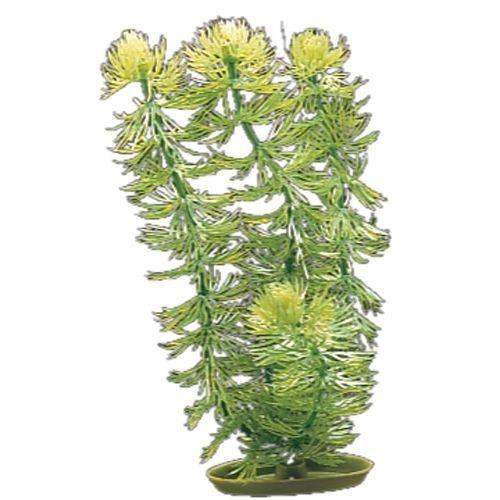 Aquascaper Plant - Plastic Hornwort Small