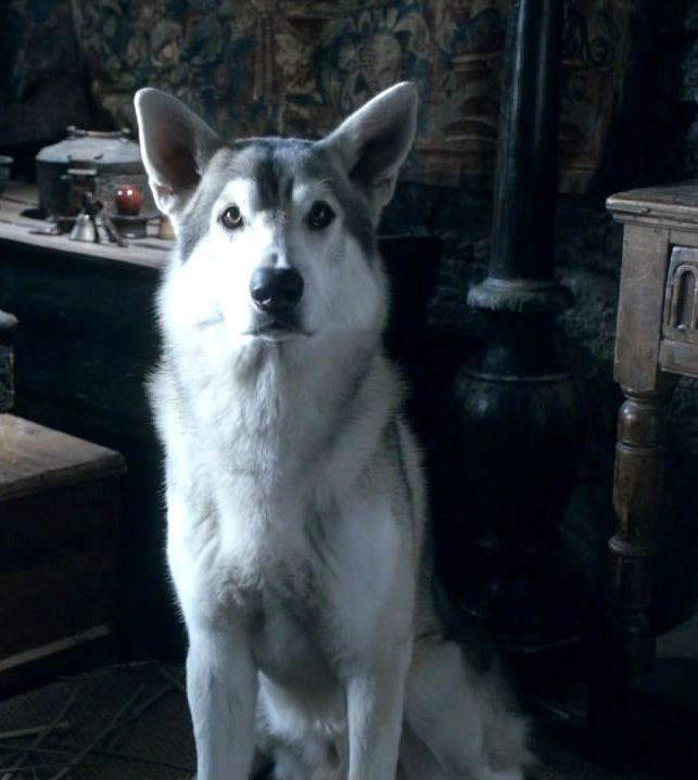 Photo of Nymeria - Arya's direwolf for fans of Game Of Thrones - Direwolves. I want this dog!