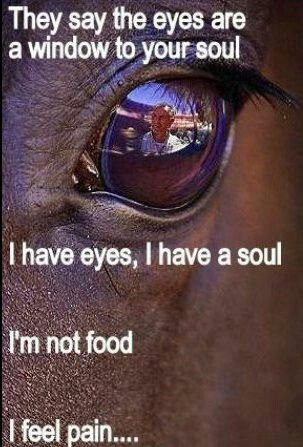 """No horse slaughter!!"""" - a horse is like a person, you don't eat a person"""