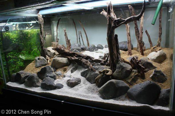 Hardscape Mossy Square Salah Satu Aquascape Favorit Aquascape Fish Tank Aquascape Aquarium
