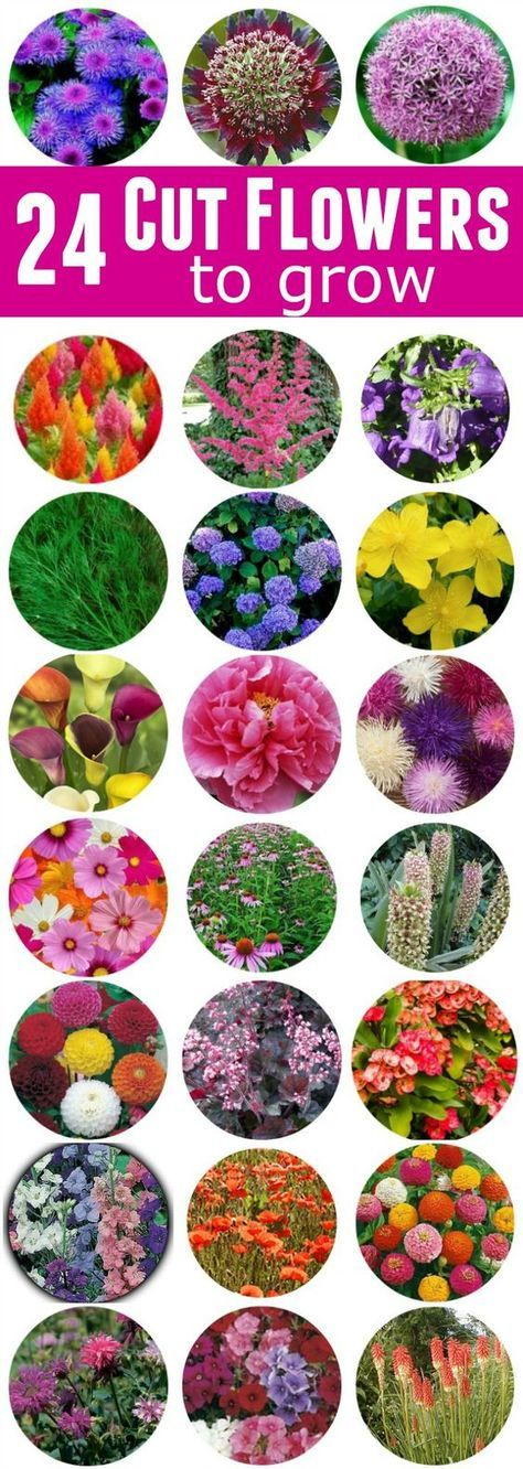 Spring - Summer - Fall - these 24 Cut Flowers to Grow will look gorgeous in your garden and give you bountiful bouquets of fresh flowers!
