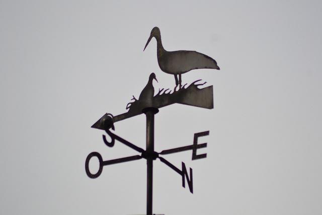 Cigüeñita en Portonson, Francia.
