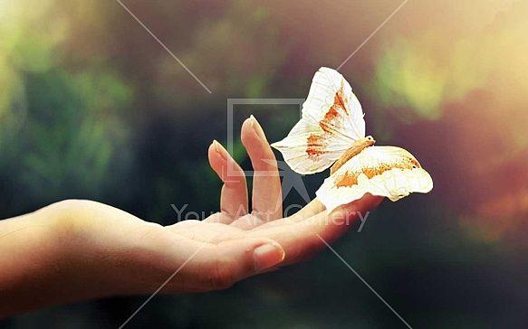 Butterfly – YAG