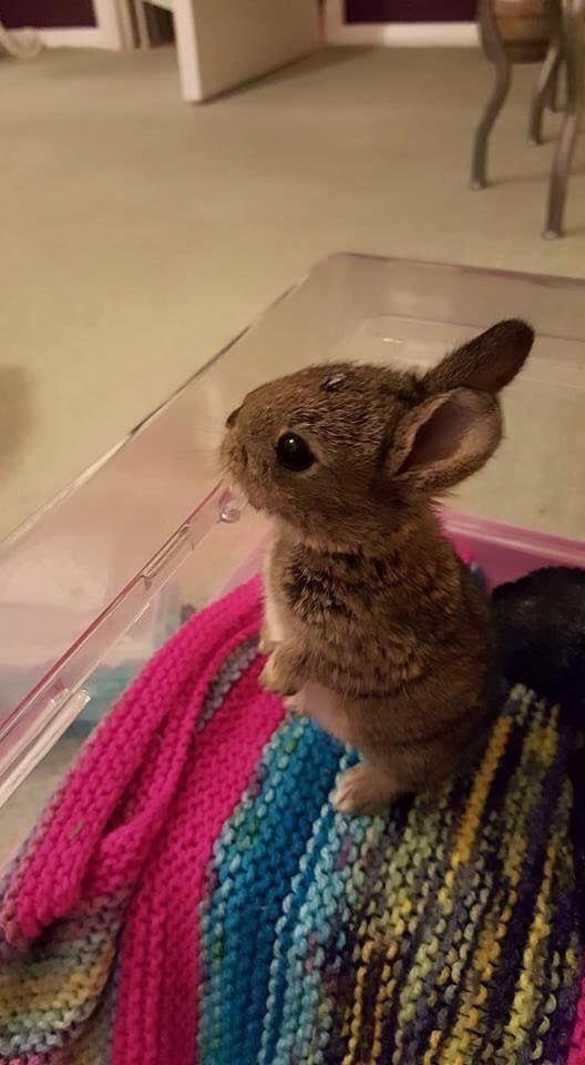 It's so cute, what is it?